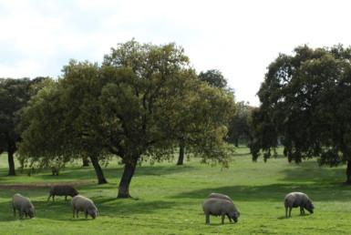 578 OPG varias Sierra Norte Sevilla 6 385x258 - Preciosas fincas de dehesa, recreo y ganaderas en Sierra Norte de Sevilla. Desde 100 hasta 1.000 hectáreas