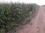 3001 OAM Fincas Rústicas SurOeste 3 150x110 - Finca de 100 hectáreas de regadío en canal, cerca de Mérida