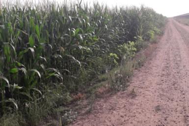 3001 OAM Fincas Rústicas SurOeste 3 385x258 - Finca de 100 hectáreas de regadío en canal, cerca de Mérida