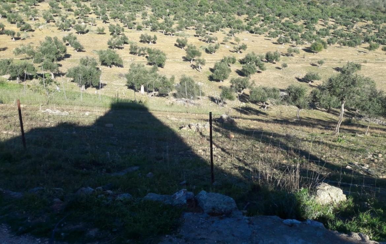 1071 OPG Fincas Rústicas SurOEste 1 1170x738 - Venta de finca de 500 hectáreas de caza y recreo en Sierra de Hornachos, con olivar, encinas y cortijo