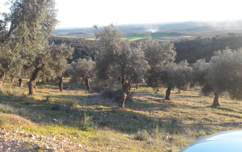 1071 OPG Fincas Rústicas SurOEste 2 1170x738 - Venta de finca de 500 hectáreas de caza y recreo en Sierra de Hornachos, con olivar, encinas y cortijo