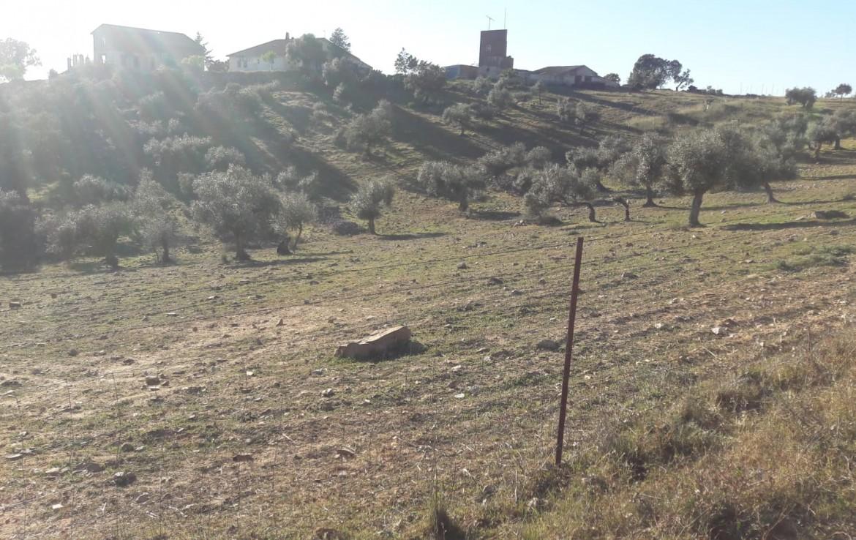 1071 OPG Fincas Rústicas SurOEste 3 1170x738 - Venta de finca de 500 hectáreas de caza y recreo en Sierra de Hornachos, con olivar, encinas y cortijo
