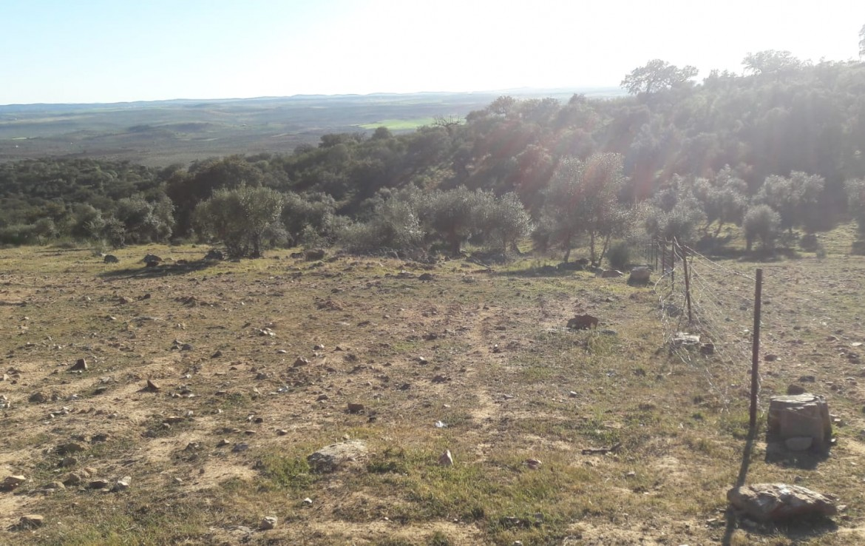1071 OPG Fincas Rústicas SurOEste 4 1170x738 - Venta de finca de 500 hectáreas de caza y recreo en Sierra de Hornachos, con olivar, encinas y cortijo
