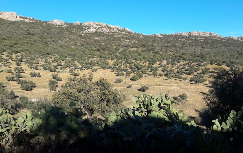 1071 OPG Fincas Rústicas SurOEste 5 1170x738 - Venta de finca de 500 hectáreas de caza y recreo en Sierra de Hornachos, con olivar, encinas y cortijo