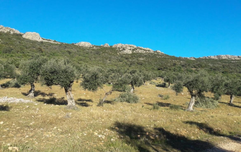1071 OPG Fincas Rústicas SurOEste 6 1170x738 - Venta de finca de 500 hectáreas de caza y recreo en Sierra de Hornachos, con olivar, encinas y cortijo