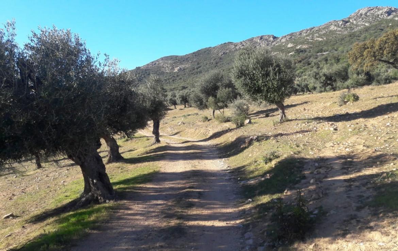 1071 OPG Fincas Rústicas SurOEste 7 1170x738 - Venta de finca de 500 hectáreas de caza y recreo en Sierra de Hornachos, con olivar, encinas y cortijo