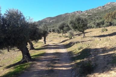 1071 OPG Fincas Rústicas SurOEste 7 385x258 - Venta de finca de 500 hectáreas de caza y recreo en Sierra de Hornachos, con olivar, encinas y cortijo