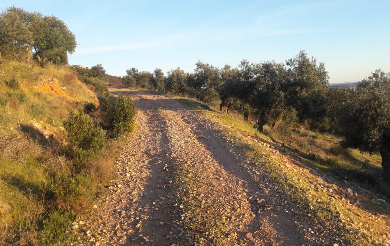 1071 OPG Fincas Rústicas SurOEste 8 1170x738 - Venta de finca de 500 hectáreas de caza y recreo en Sierra de Hornachos, con olivar, encinas y cortijo