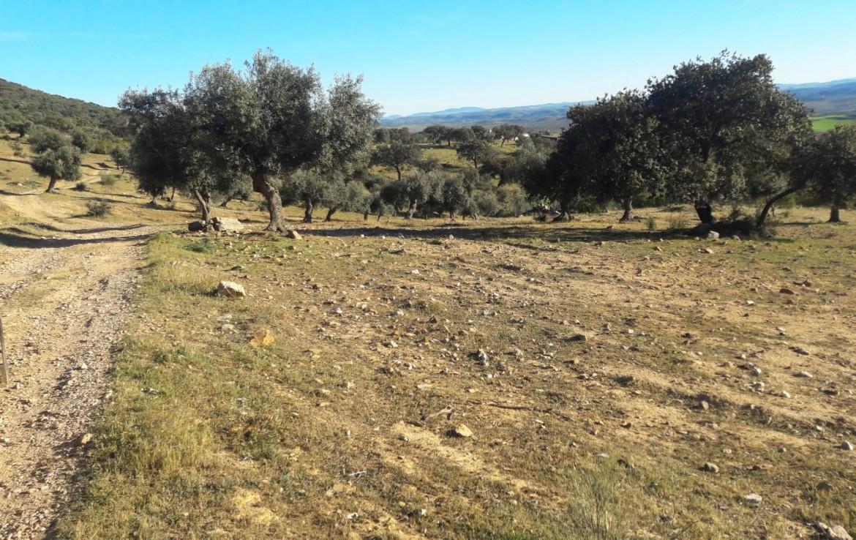 1071 OPG Fincas Rústicas SurOEste 9 1170x738 - Venta de finca de 500 hectáreas de caza y recreo en Sierra de Hornachos, con olivar, encinas y cortijo