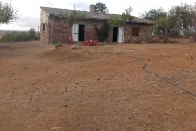 1073 5 Don Álvaro 9 385x258 - Vendo finca de Olivos en Don Álvaro